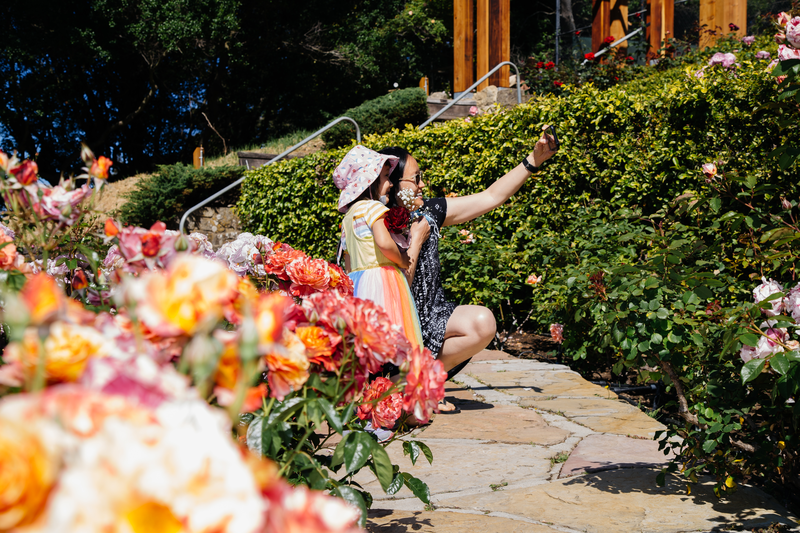 Berkeley Rose Garden opens in time for Mother's Day