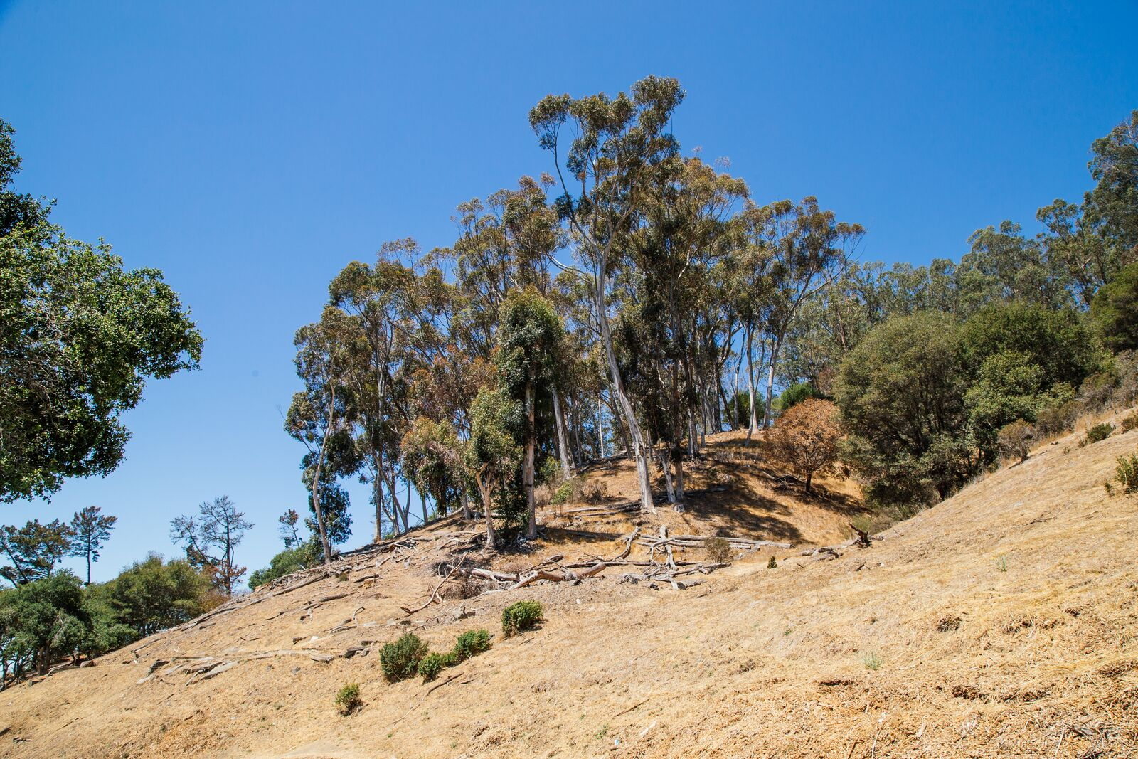 Brush and dead trees cover the Berkeley Hills on Aug. 10, 2021.